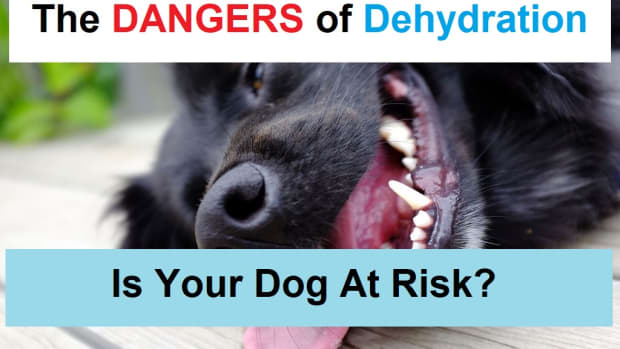dogs-and-dehydration-how-to-make-sure-your-dog-gets-enough-to-drink