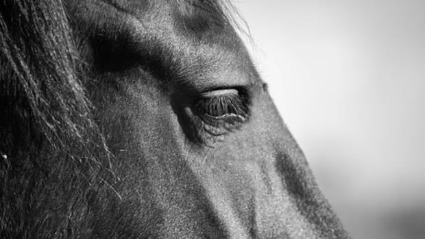 15-big-strong-horse-names