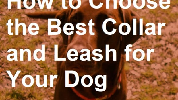 which-collar-and-leash-should-you-get-for-your-dog