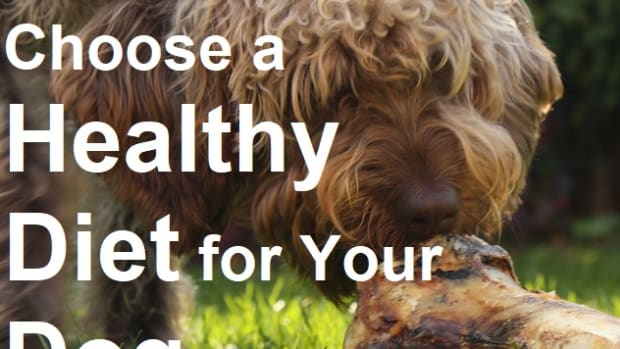 how-to-choose-a-healthy-diet-for-your-dog