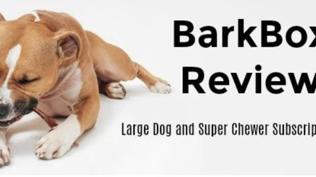 barkbox-review-classic-and-super-chewer-subscription-box