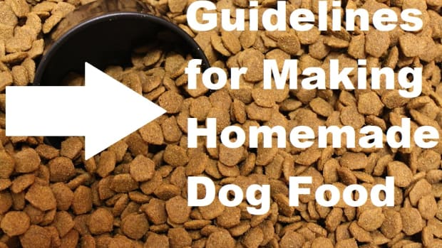 what-you-need-to-know-to-make-your-own-dog-food-from-scratch