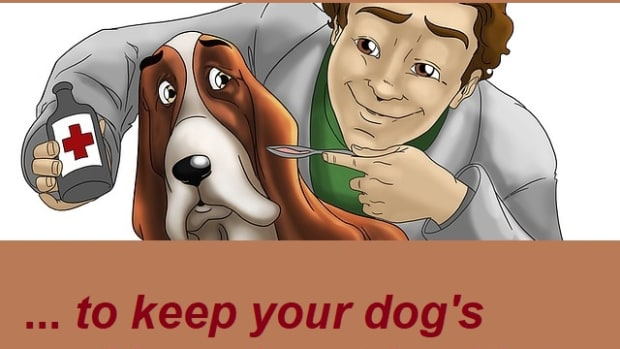 the-best-dietary-supplements-to-keep-your-dogs-skin-and-coat-healthy