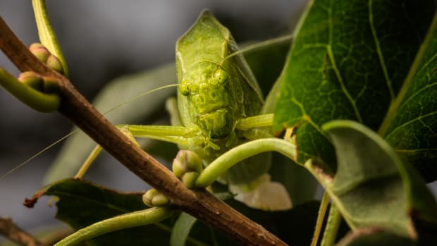 the-brief-interesting-life-of-a-katydid