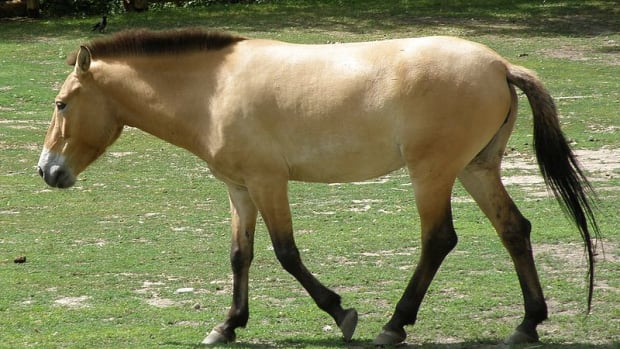 an-intro-to-equine-coat-color-genetics