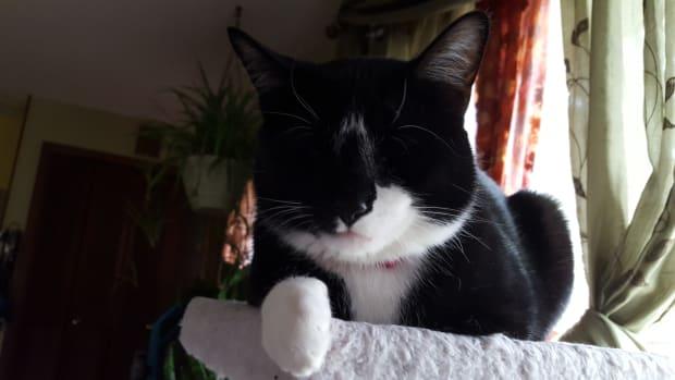 my-cat-snores