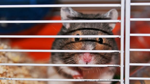 the-best-hamster-cage-size