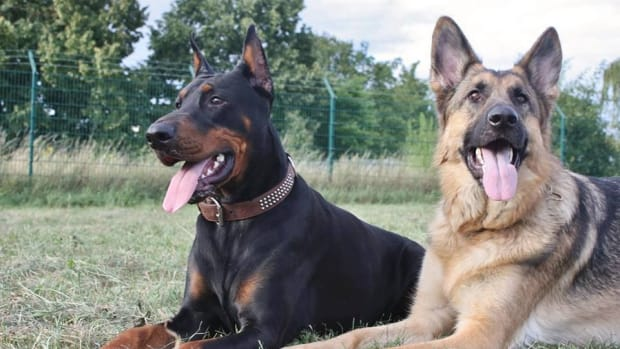 the-canine-team