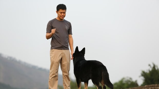 how-to-become-a-dog-trainer-from-certification-to-apprenticeship