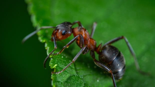 how-long-do-ants-live