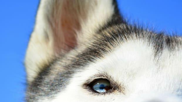 husky-names