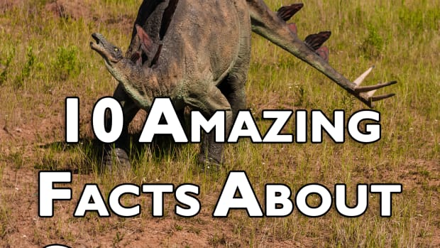 10-amazing-facts-about-stegosaurus-ten-things-you-probably-didnt-know-about-stegosaurus
