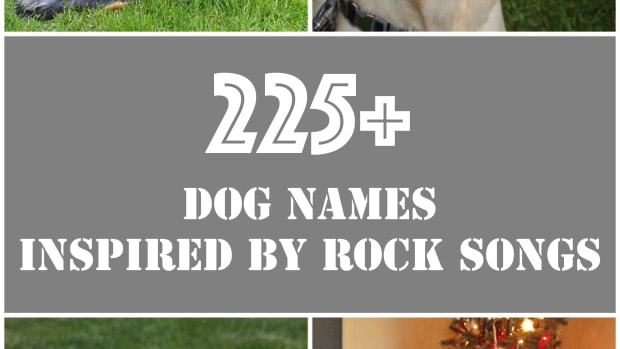 awesome-unique-dog-names-inspired-by-rock-music-songs