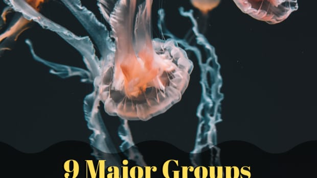 10-most-common-invertebrate-animals
