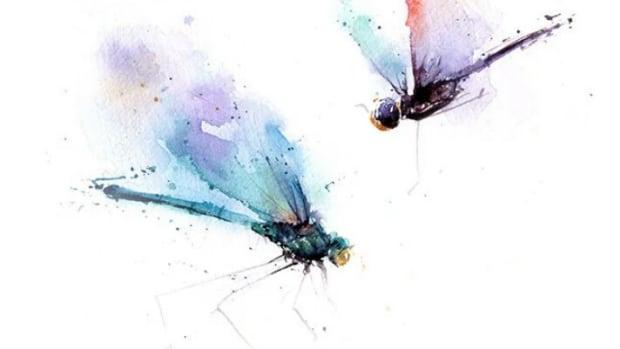 dragonflies-roshena