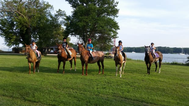 heres-to-the-lesson-horses