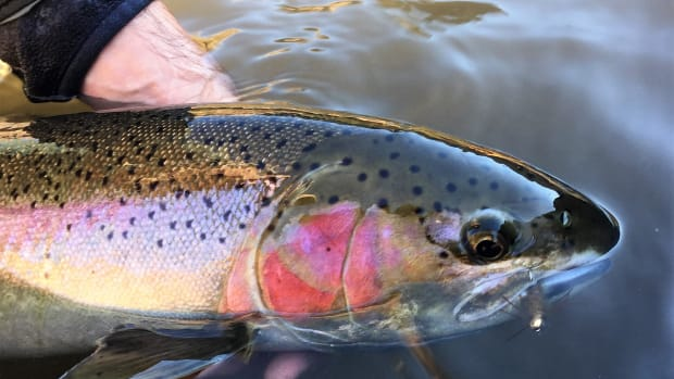 fly-fishing-for-steelhead-the-fundamentals