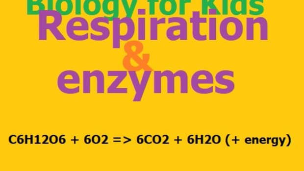 biology-for-kids-respiration-and-enzymes