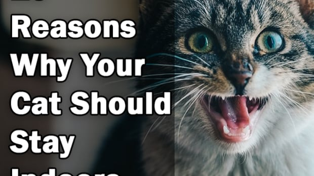 10-reasons-why-your-cat-should-be-an-indoor-only-cat