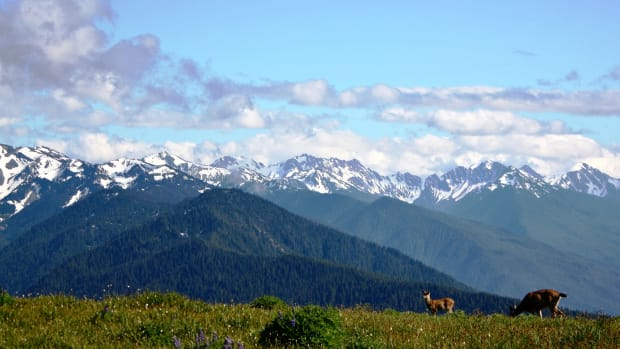 top-10-things-to-do-in-olympic-national-park