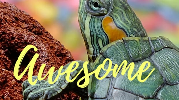 the-best-popular-fun-creative-pet-turtle-names