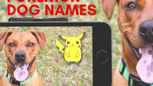 100-pokemon-dog-names