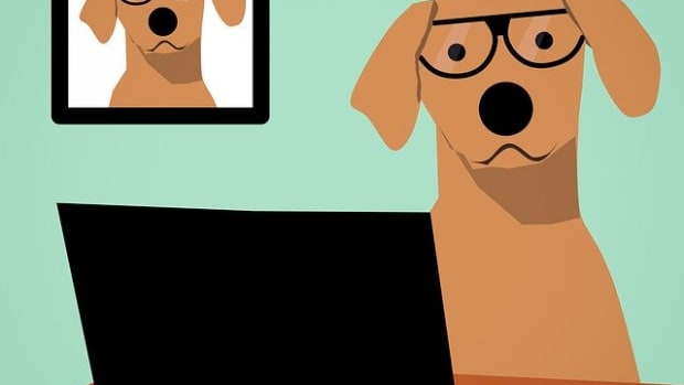 50-scientist-dog-names-for-smart-nerdy-pups