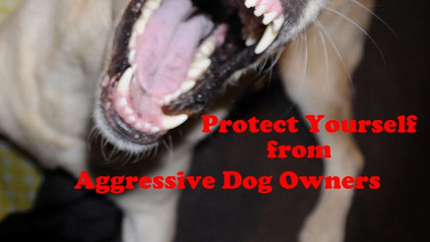 angry-owners-of-loose-and-aggressive-dogs