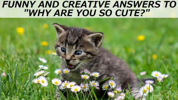 funny-and-creative-answers-to-why-are-you-so-cute