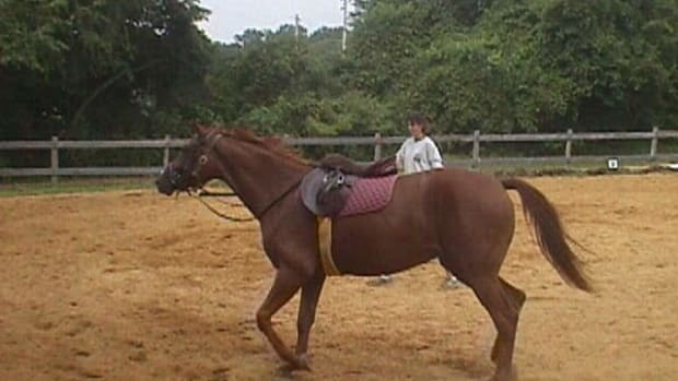 lunging-your-horse-before-riding