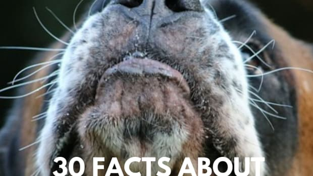 30-facts-about-your-dogs-nose-you-didnt-know-until-now