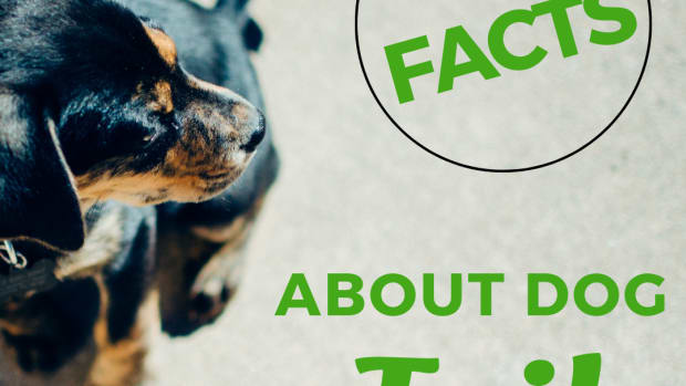 30-interesting-facts-about-dog-tails