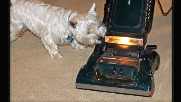 why-does-my-dog-attack-my-vacuum