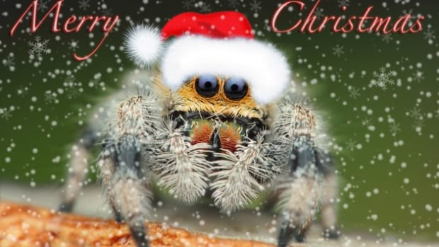christmas-spiders