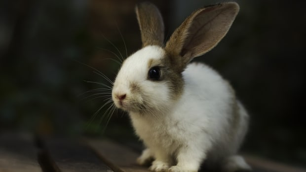 heres-how-you-can-adopt-a-rabbit-from-a-shelter
