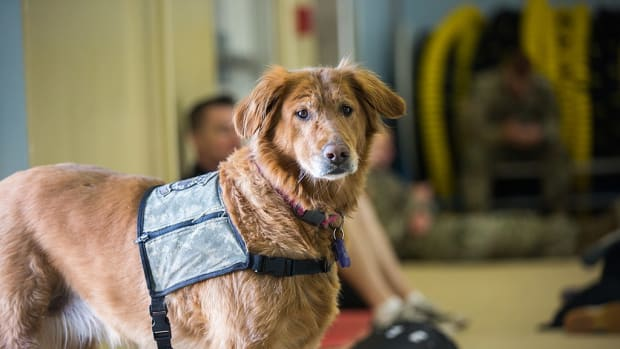 names-ideas-for-comfort-therapy-and-service-dogs