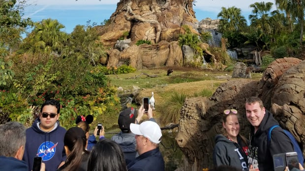 experience-walt-disney-world-as-a-kid-at-heart-at-animal-kingdom