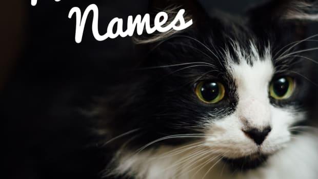 200-best-names-for-tuxedo-cats
