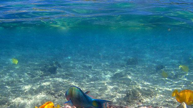 hawaii-snorkeling-at-kahaluu-beach-park-big-island