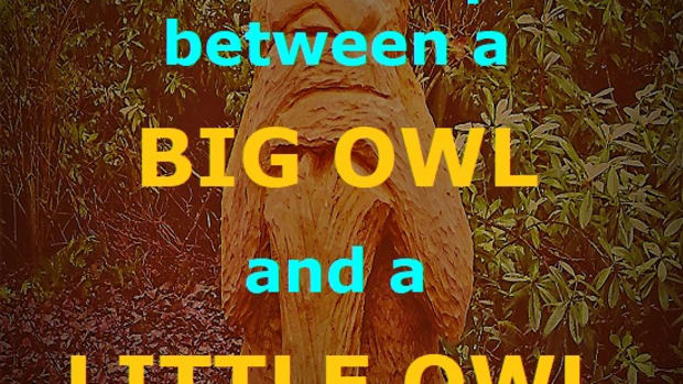 little-owl-a-friendship-poem