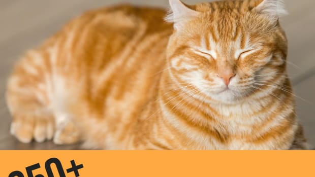 best-names-for-orange-cats