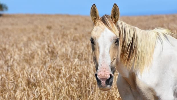 your-visual-guide-to-face-and-leg-markings-on-horses
