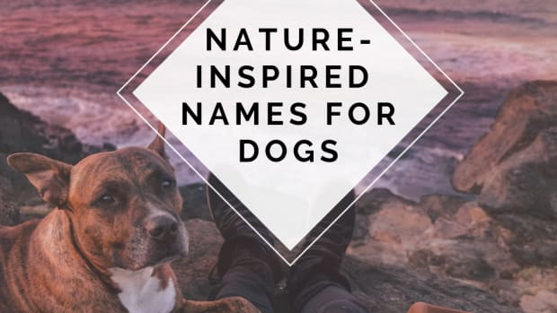 beautiful-nature-inspired-names-for-your-dog-or-puppy