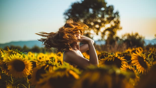 entrancing-sunflowers