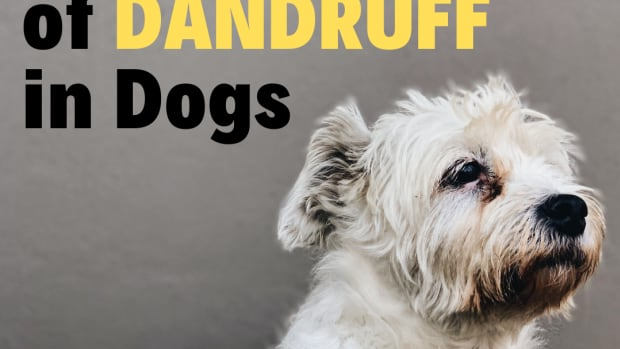 natural-at-home-dandruff-treatments-for-your-dog