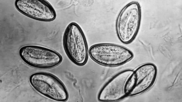 top-ten-deadliest-parasites-in-the-world
