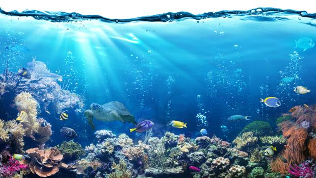 saltwater-aquarium-fish-for-beginners