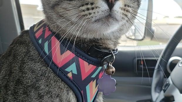 leash-train-your-cat