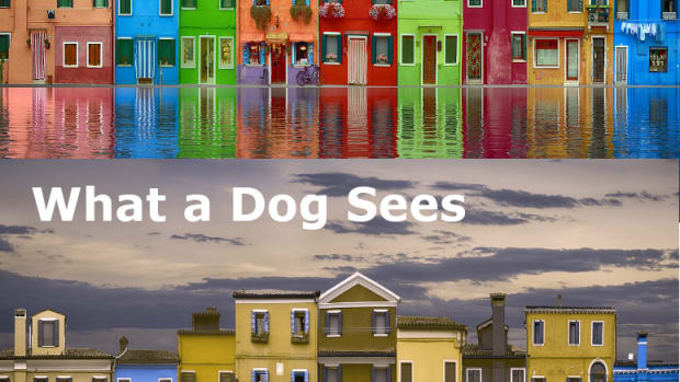 are-dogs-color-blind