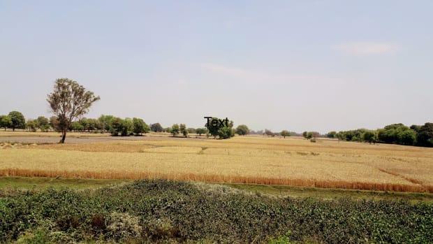gratitudea-tribute-to-the-farmerspoem